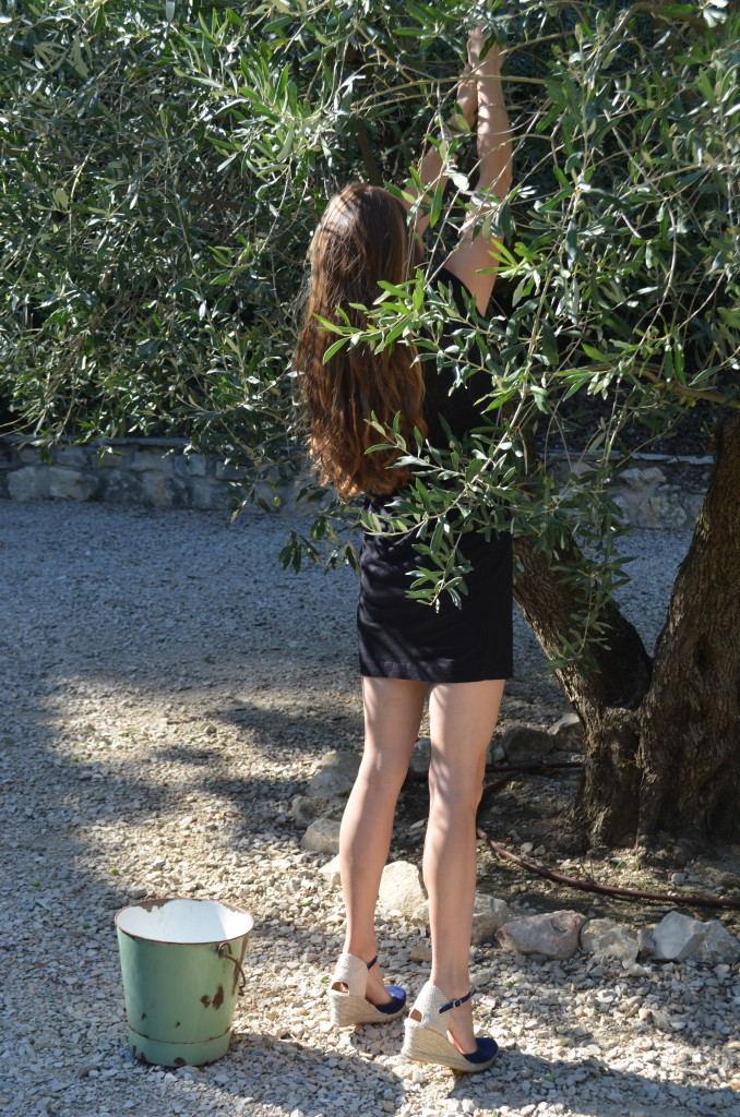 curiousprovence olive picking