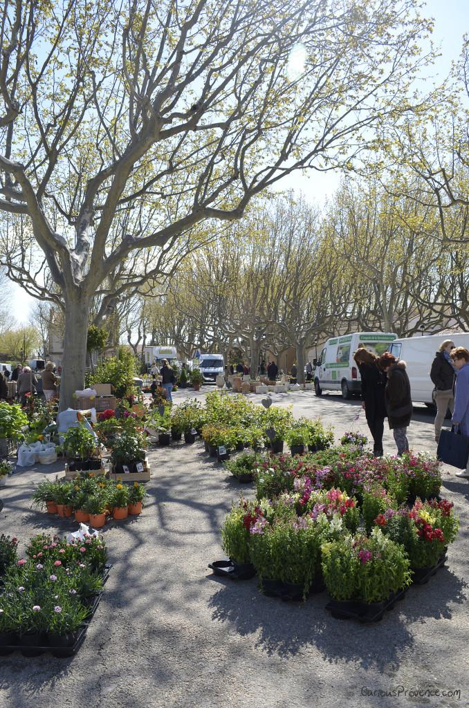 Floralies Maussane Provence