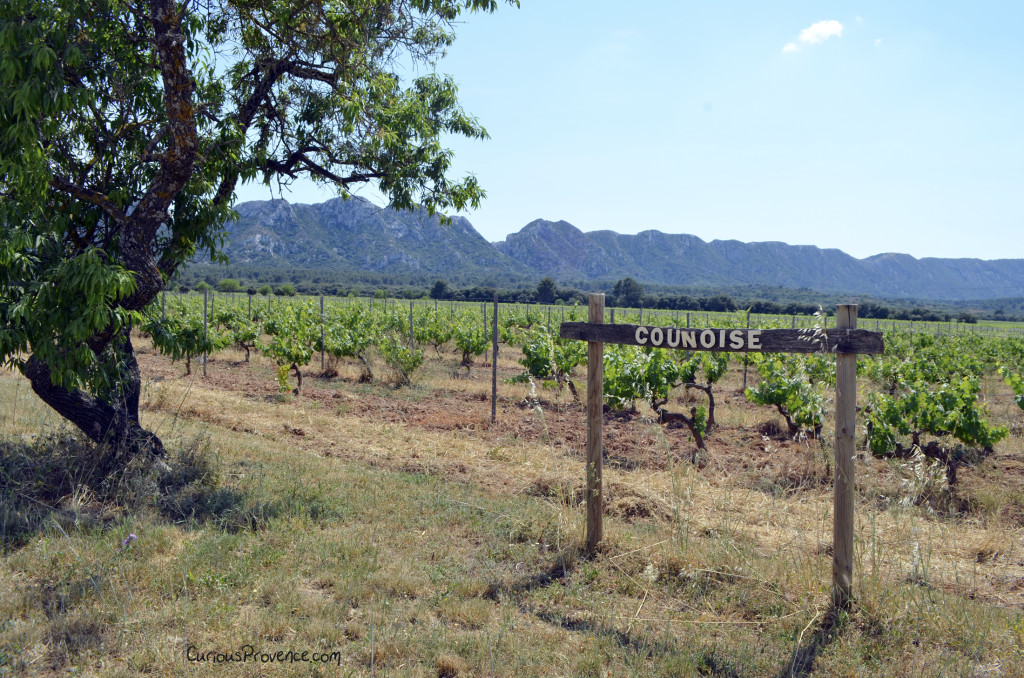 counoise grape provence