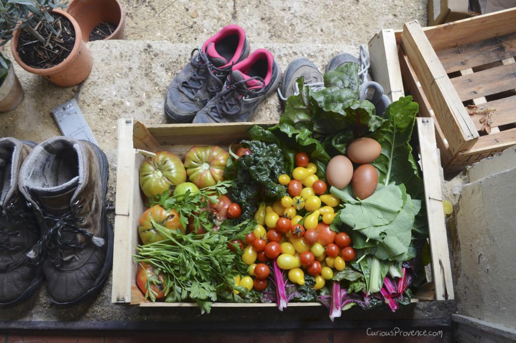 garden produce provence