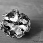 walnut in shell detail
