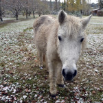 cheval camargue provence