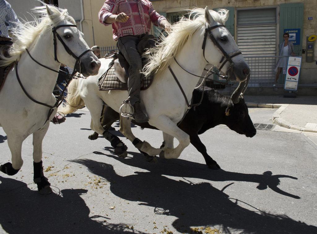 taureau provence