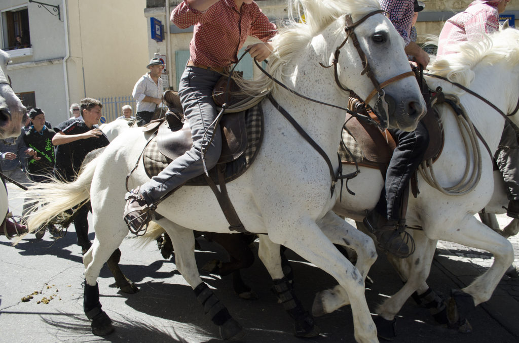 camargue horse provence