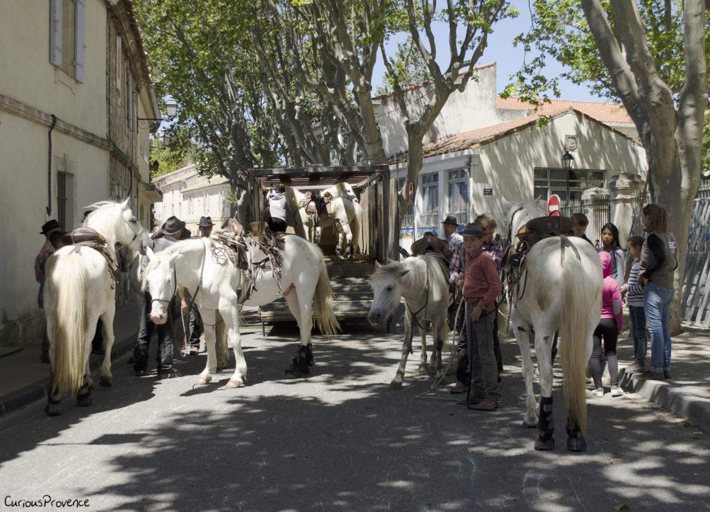 camargue horses provence
