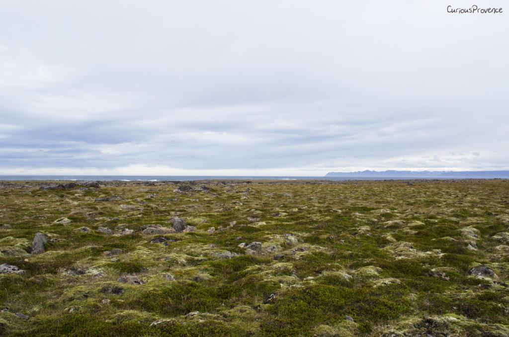 Iceland Moss