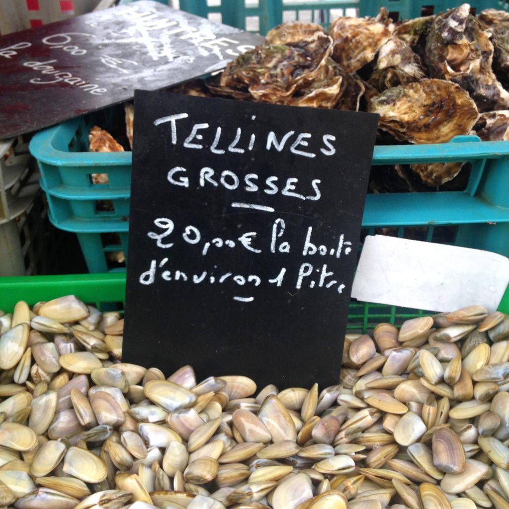 tellines