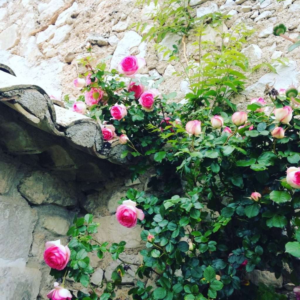 roses on stone wall
