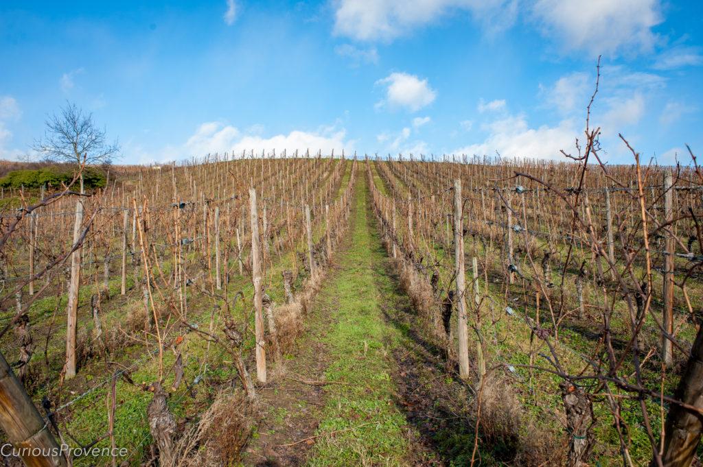 vineyard alsace curious provence