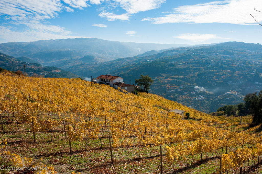 douro valley curiousprovence