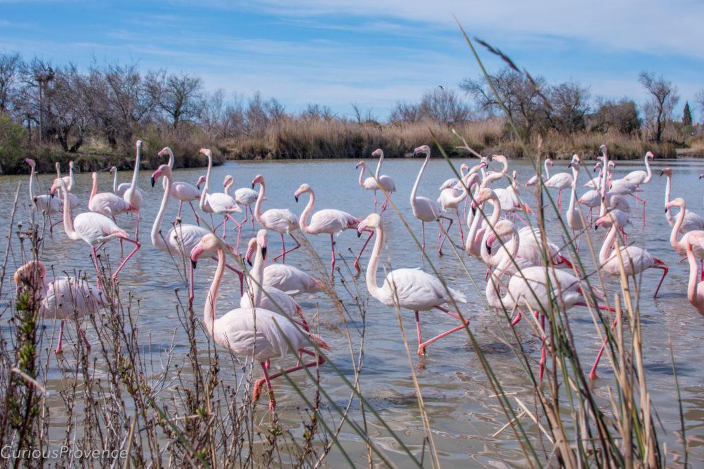 parc ornithologique provence
