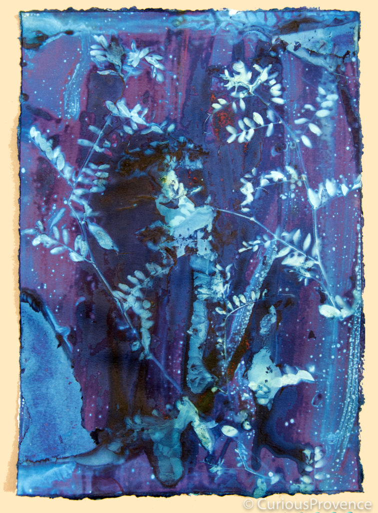 cyanotypes Ashley tinker