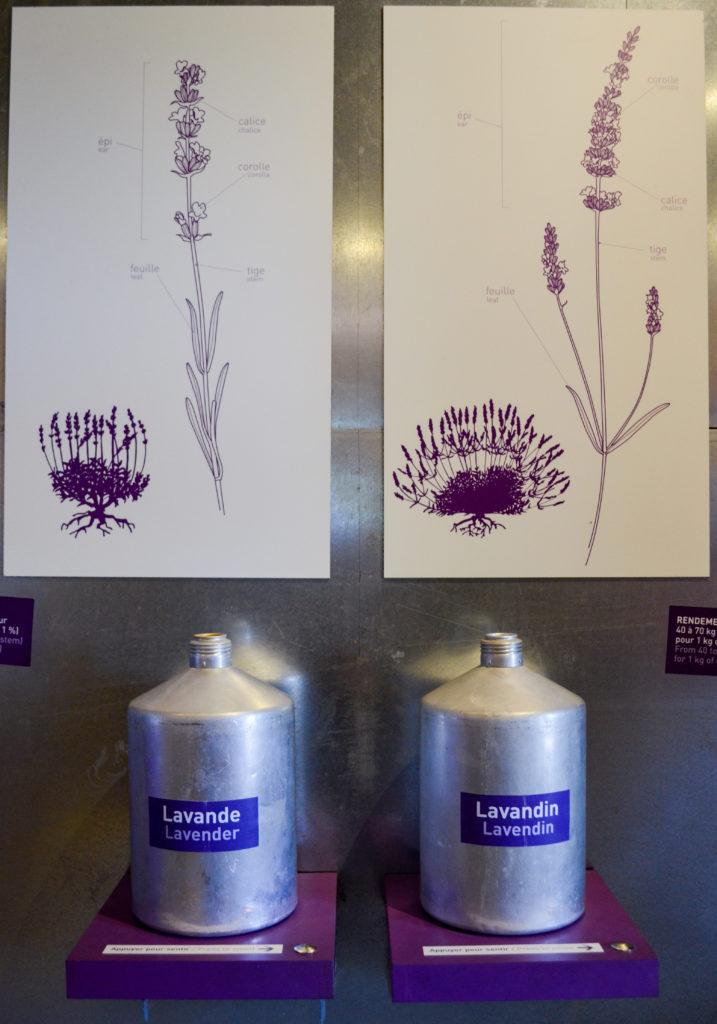 lavandin vs lavande