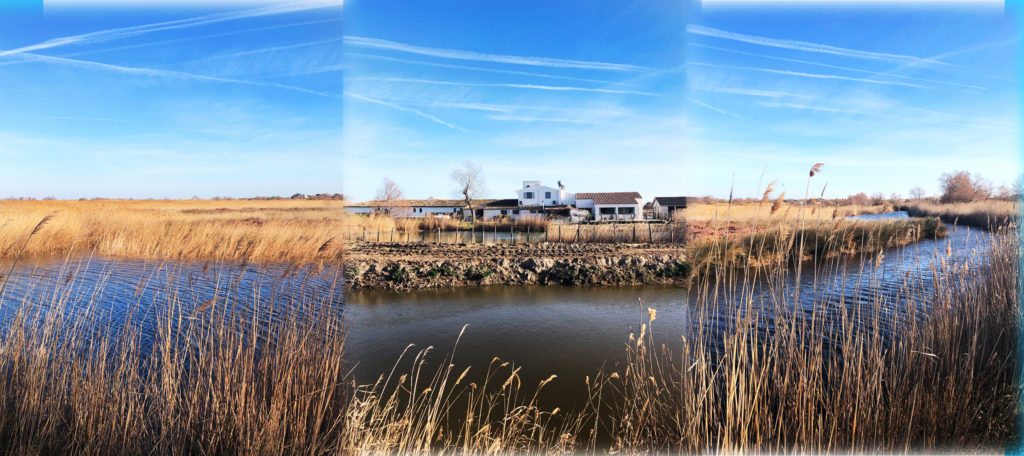 Camargue by curiousprovence