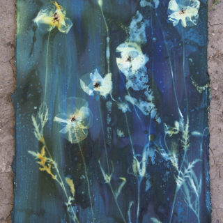cyanotypes by ashley tinker