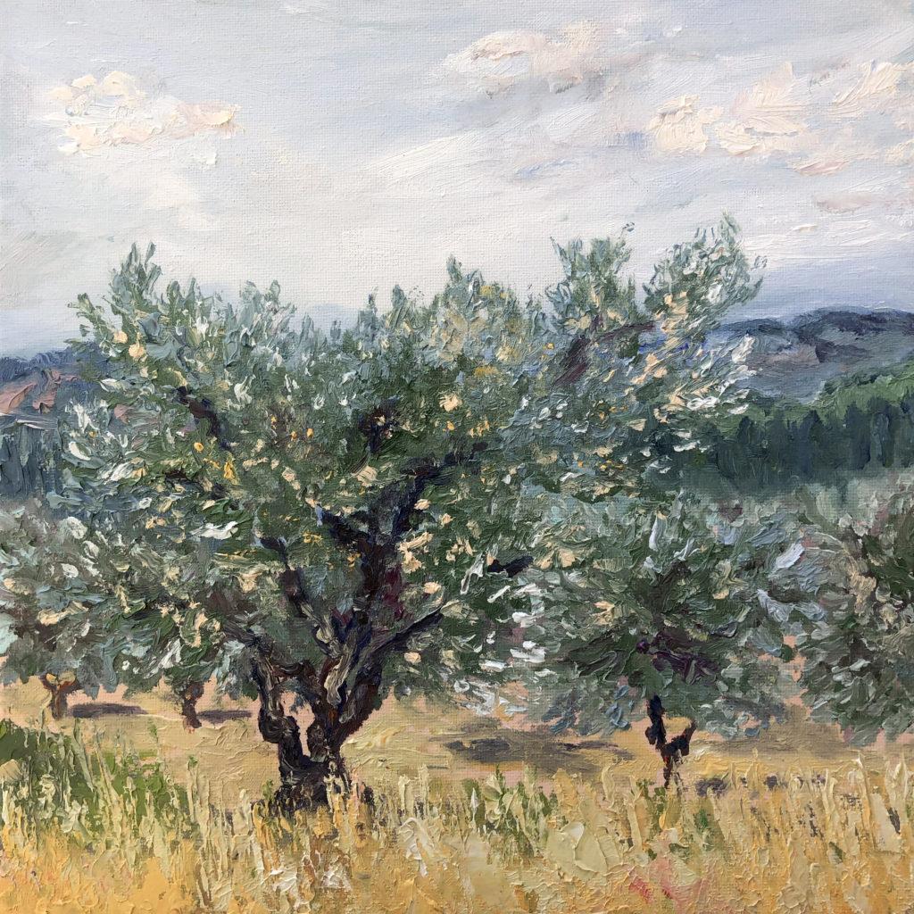 olive tree les alpilles provence